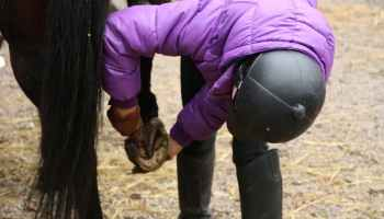 Hoof Care Tips