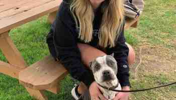 pit bull clare dunn flew cross country to rescue from being put down