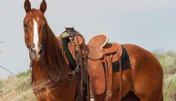 cowgirl cadillacs cowgirl magazine