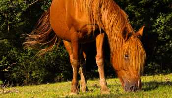 horse grazing in grass cowgirl magazine