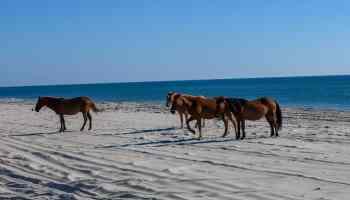 corolla wild horses cowgirl magazine