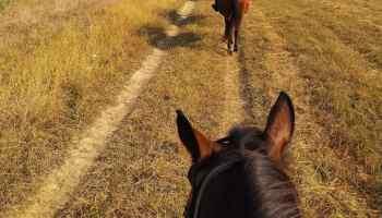 grass trail ride cowgirl magazine