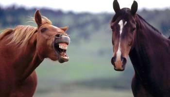 horse memes cowgirl magazine