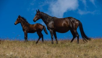 foal cowgirl magazine