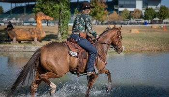 Career change thoroughbred style cowgirl magazine
