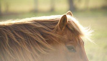 sand colic cowgirl magazine