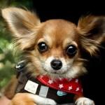 APEL! Krakowskie schronisko apeluje o przygarnięcie psów do domów tymczasowych