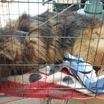 Ktoś próbował zabić psa? Interwencja KTOZ