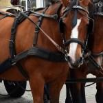 Wprowadzono zakaz przejazdu dla dorożek przez Rynek Główny