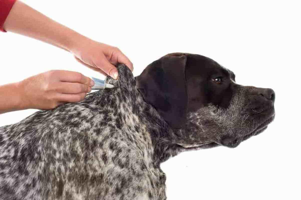 Krople na pchły dla psa