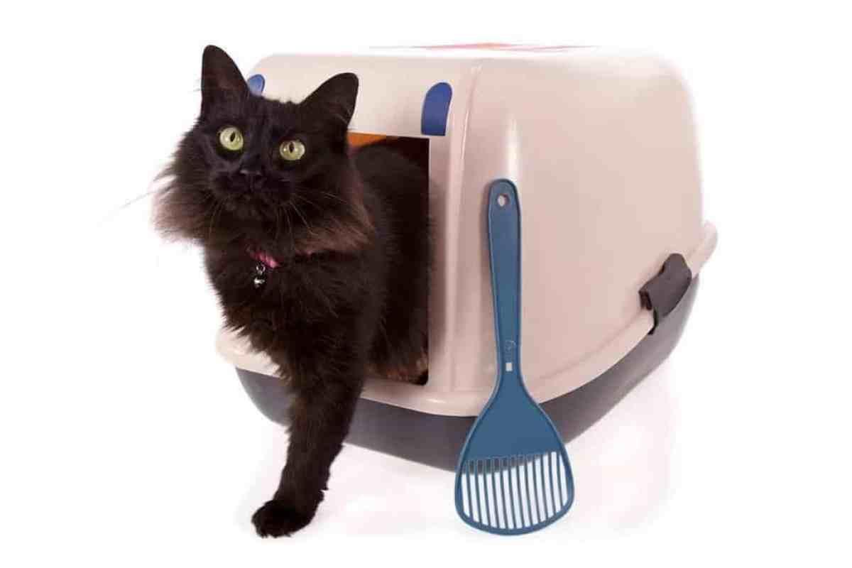 Pusta kuweta dla kota