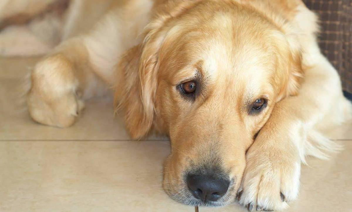 Niedoczynność tarczycy u psa objawy