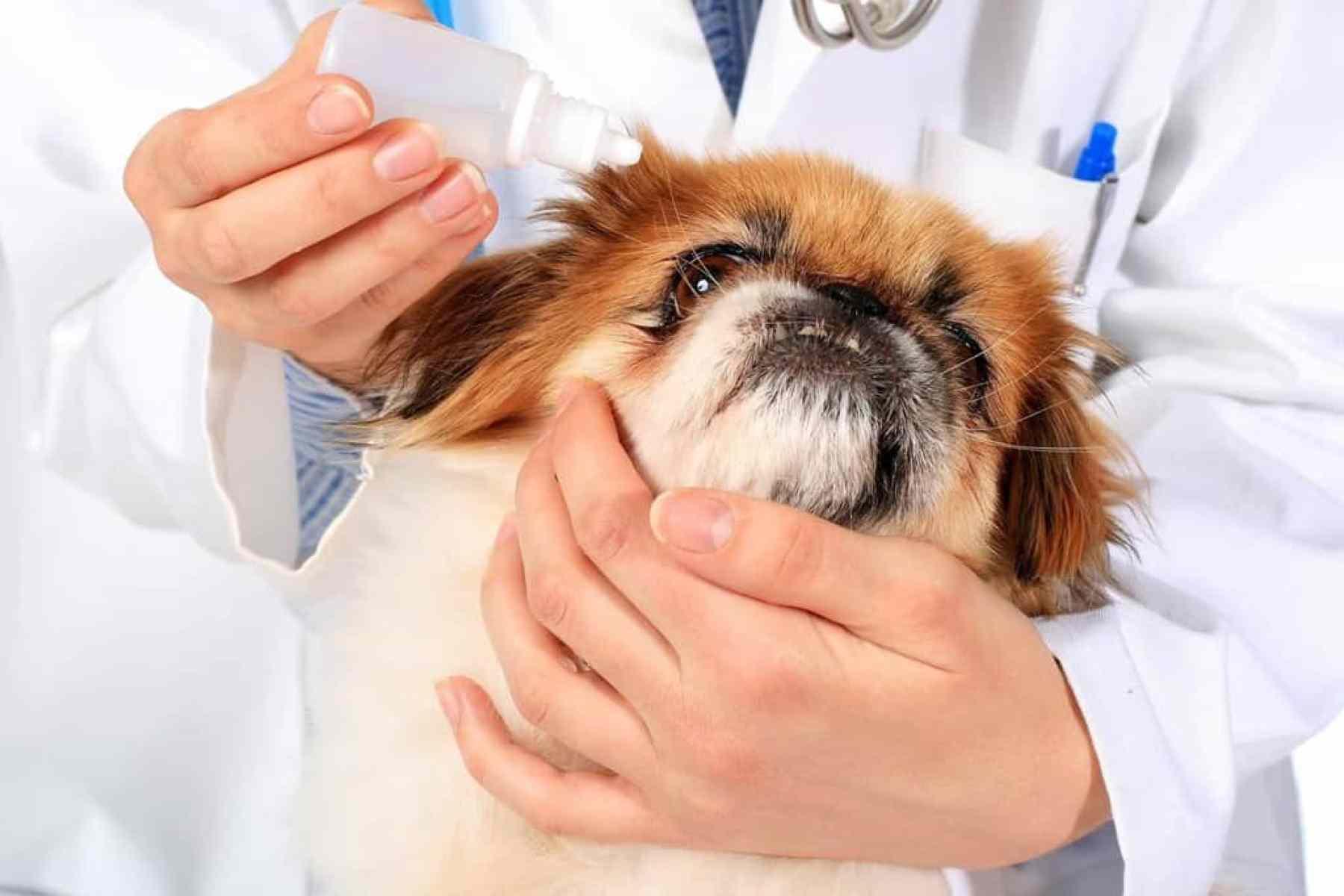 Jak dbać o psa po zabiegu?