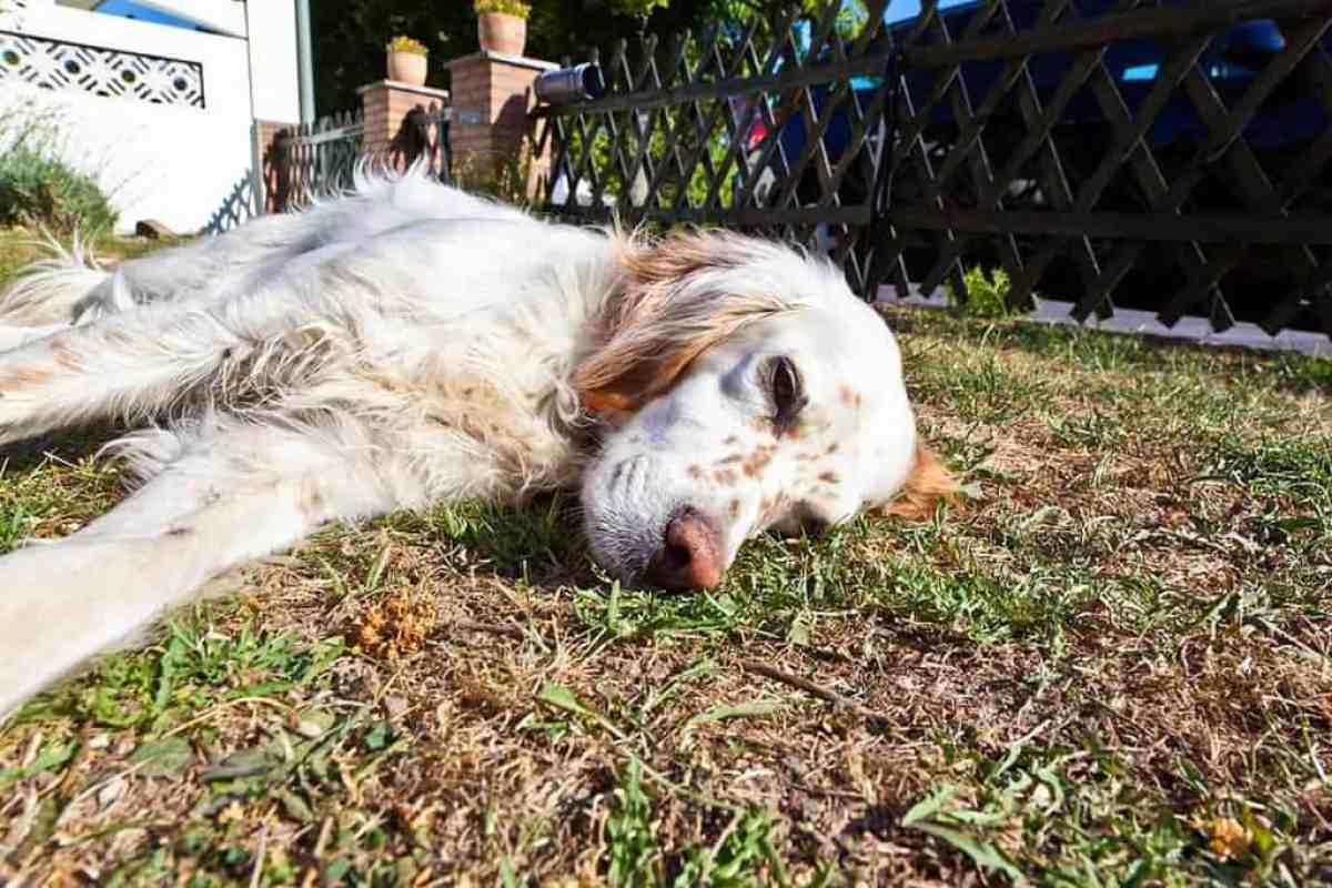 Objawy padaczki u psa