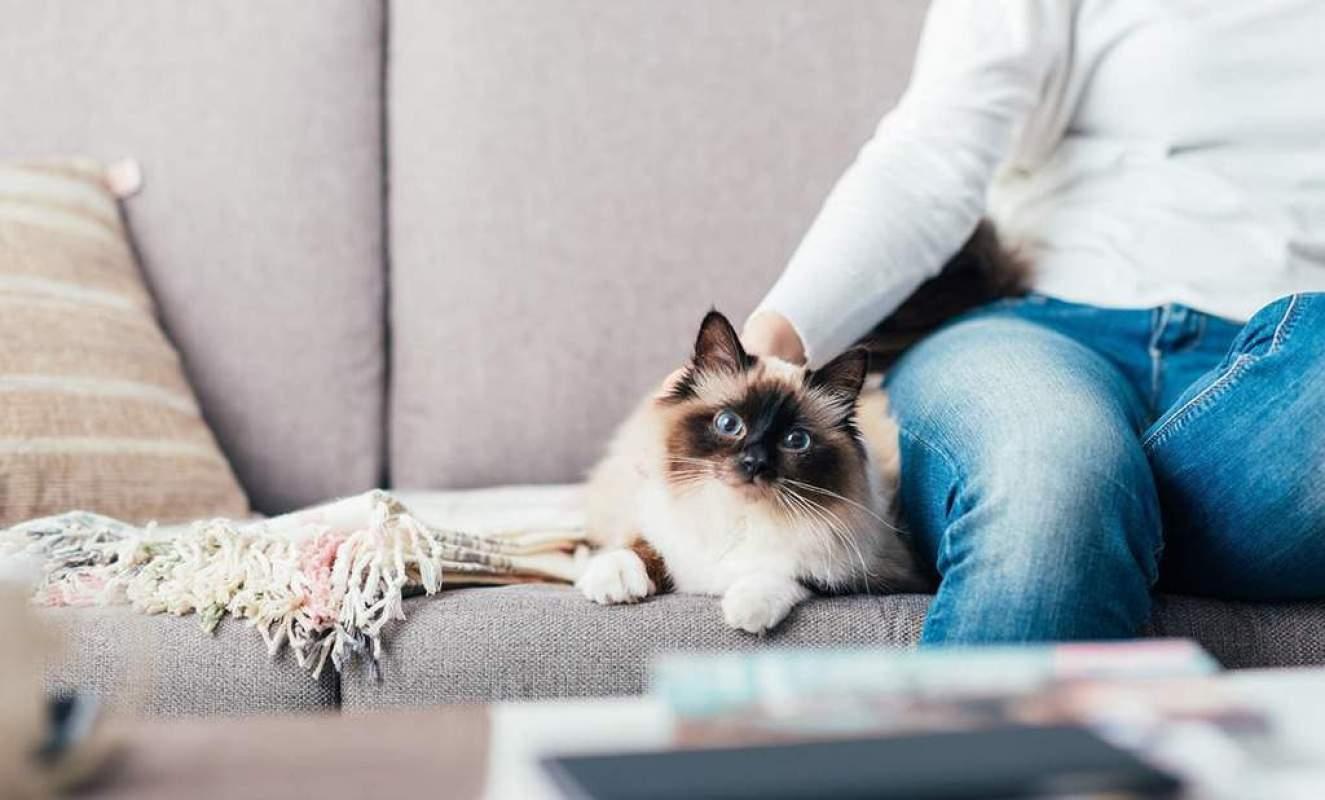 Jak postępować z kotem chorym na PNN?