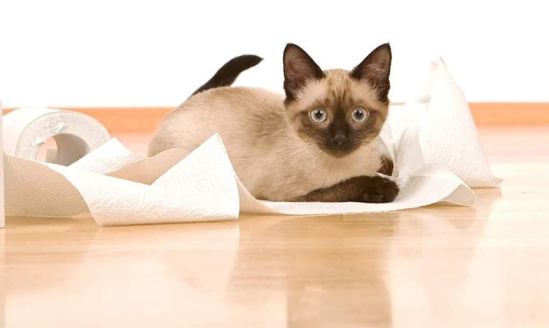 Co oznacza biegunka u kota?