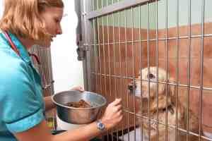 Jak karmić psa i kota z chorobą nowotworową?