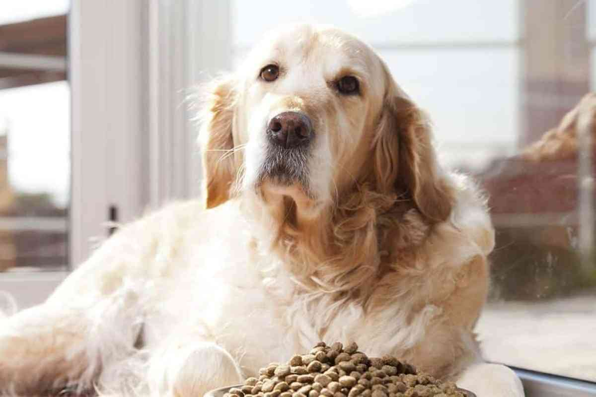Zła dieta to jedna z przyczyn łupieżu u psa
