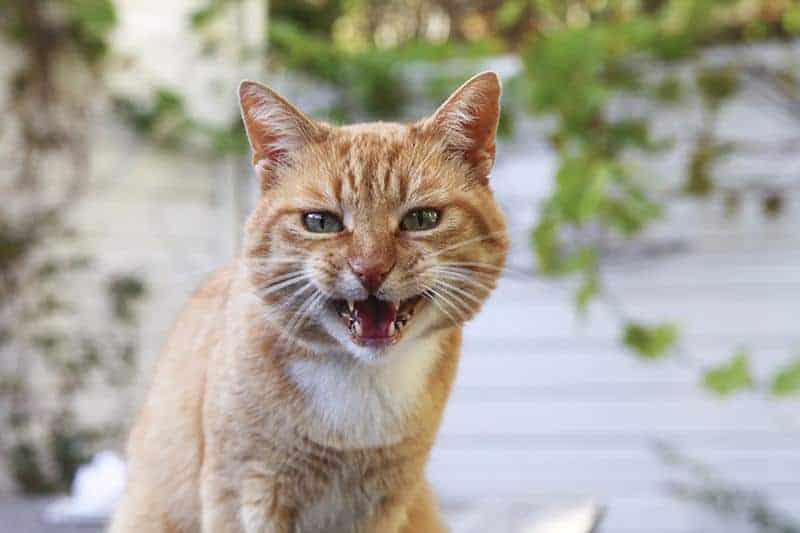 Jakie są objawy agresji u kota?
