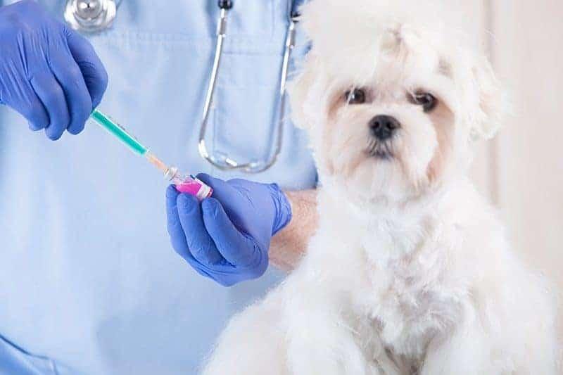Jak często szczepić psa?