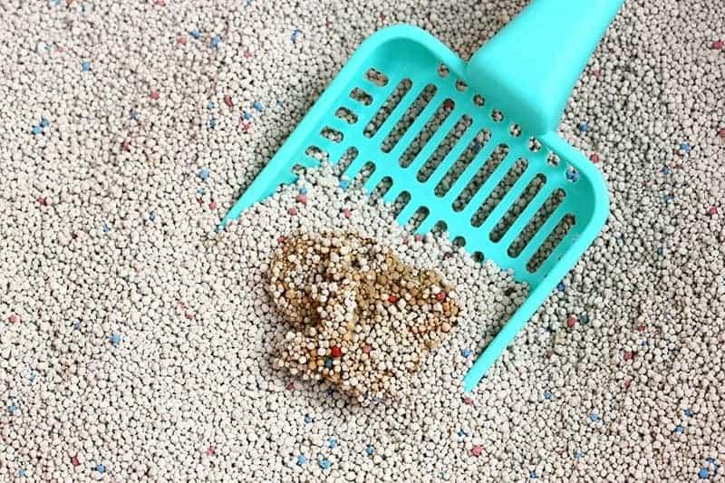 Jak czyścić kocią kuwetę?