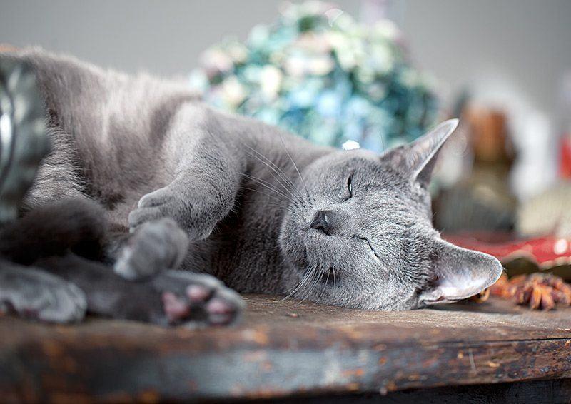 Apatia i szybkie męczenie się mogą być objawem nadciśnienia u kota