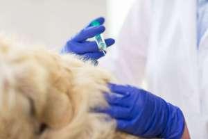 Szczepienie psa: ile kosztuje i kiedy szczepić [kalendarz szczepień]