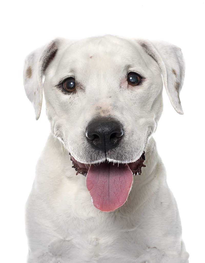 Zaćma u psa leczenie