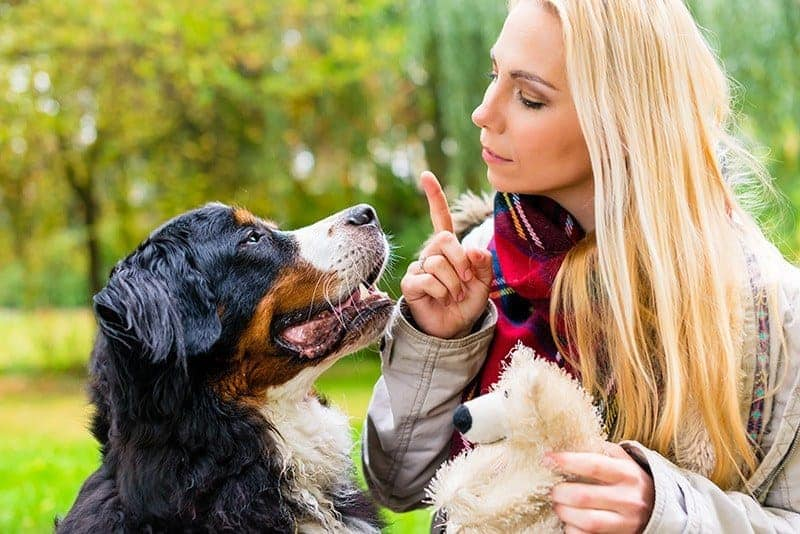 Naucz psa posłuszeństwa