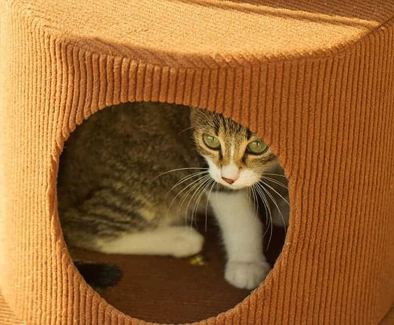 Jak oswoić koty ze sobą?