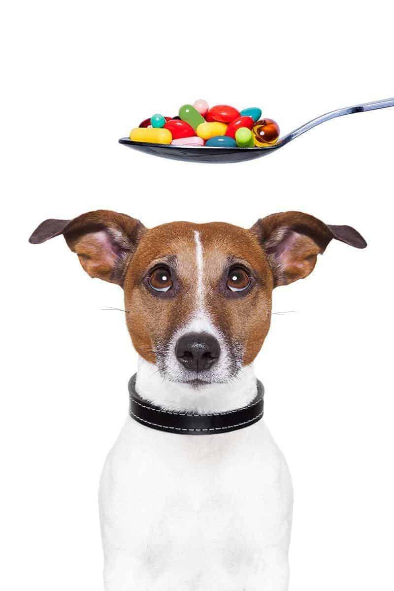 Suplementy Dla Psa Kiedy Warto Je Stosować I Jak Działają