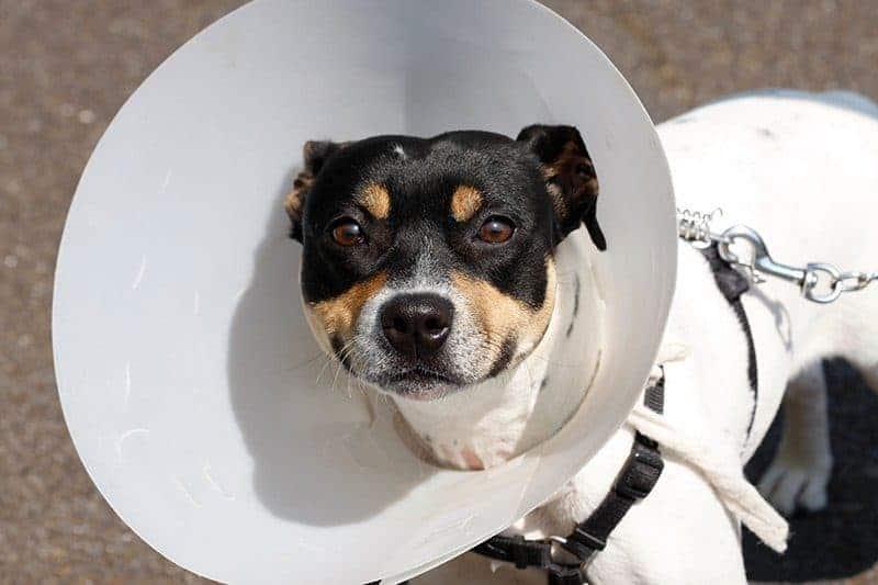 Kołnierz dla psa