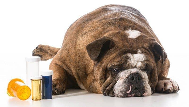 Zatrucie lekami u psa