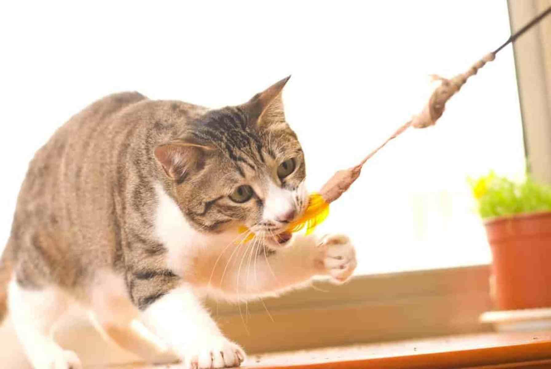Urozmaicenie środowiska życia kota domowego