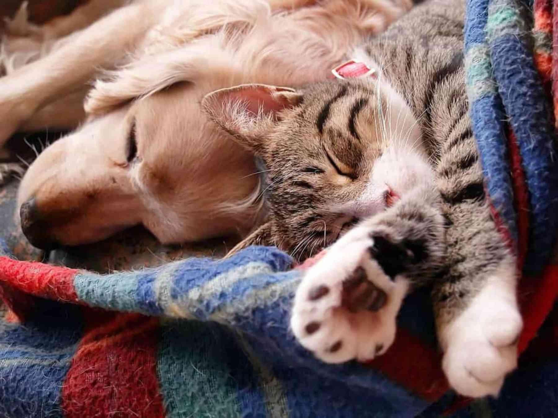 Jak oswoić psa z kotem?