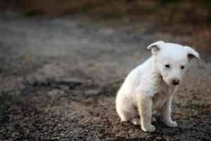 Lamblia u psa: objawy, leczenie i zapobieganie giardiozie