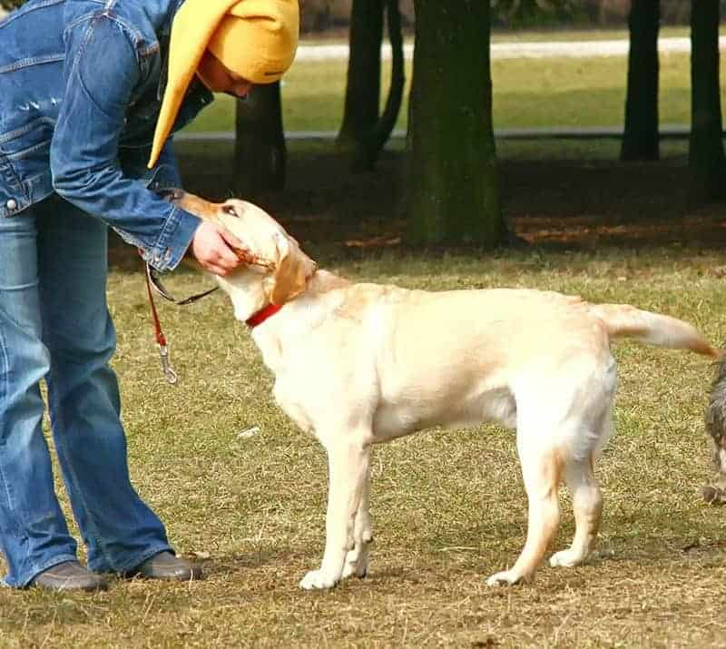 Jak ukarać psa: reprymenda słowna