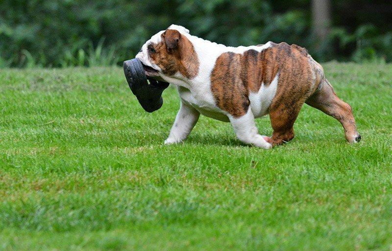 Czy karanie psa jest niezbędne?
