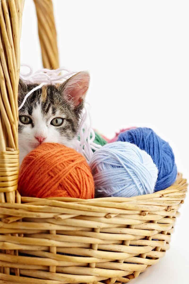 Co to jest socjalizacja kota