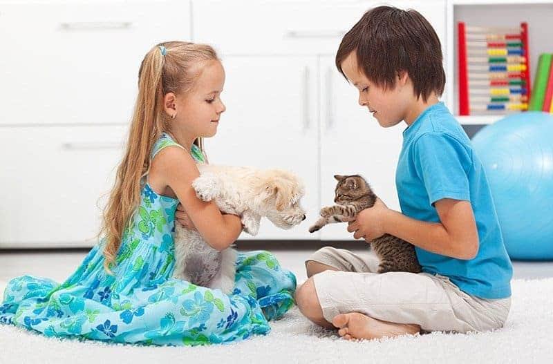Jak przygotować dom na przyjęcie kociaka?