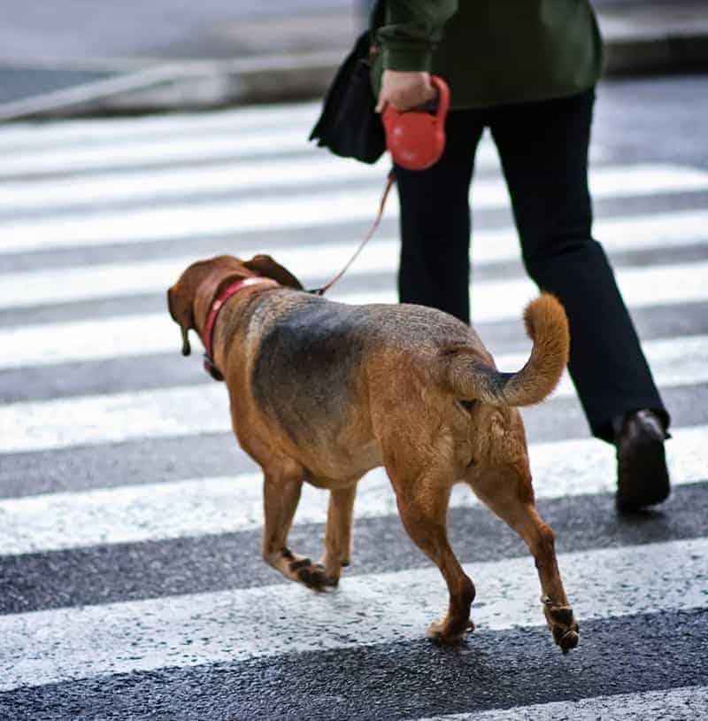 Smycz dla psa flexi