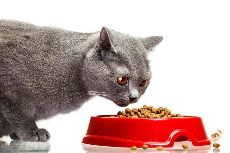 Alergia pokarmowa kota