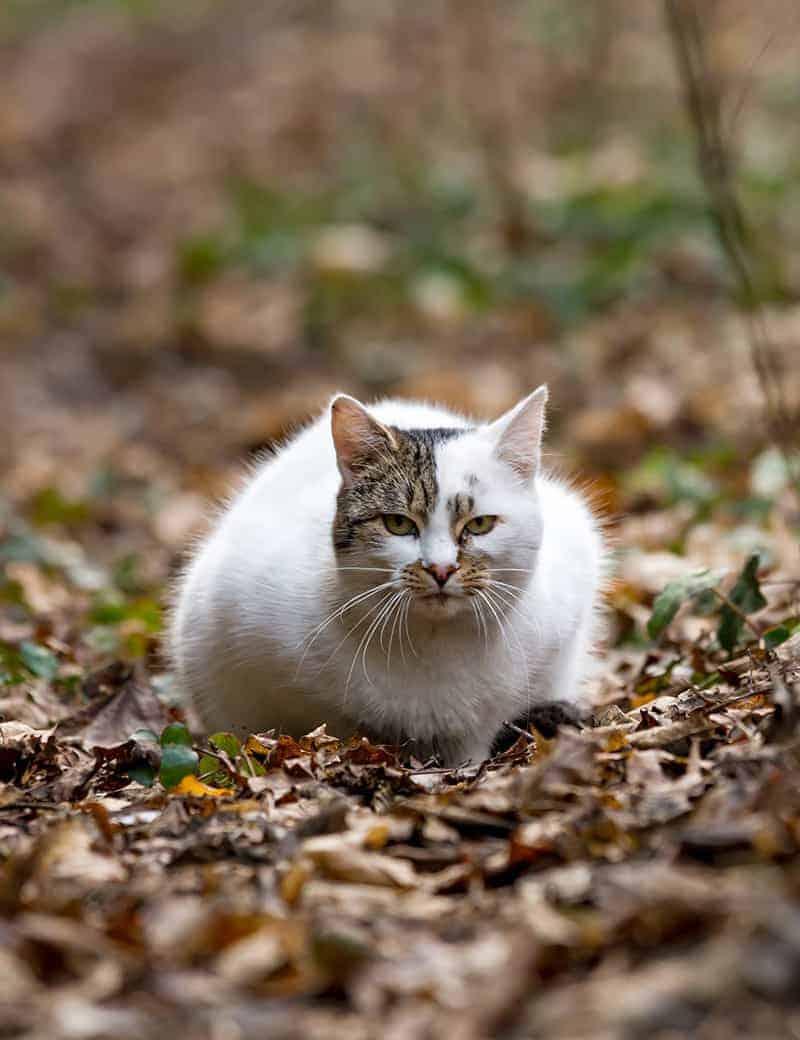 Jak wspomóc odchudzanie kota?