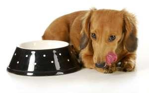 Karma bytowa dla psa