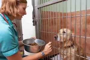 Karma weterynaryjna dla psa i kota: co to jest i którą wybrać?