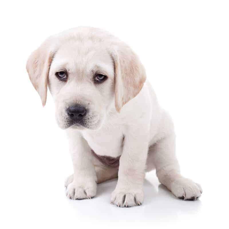 Kiedy mówimy o przeziębieniu u psa?