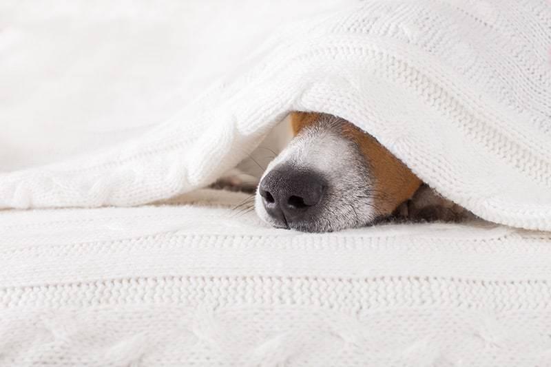 Przeziębienie u psa objawy