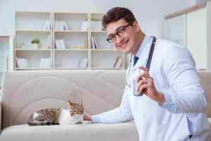 Feromony dla kota