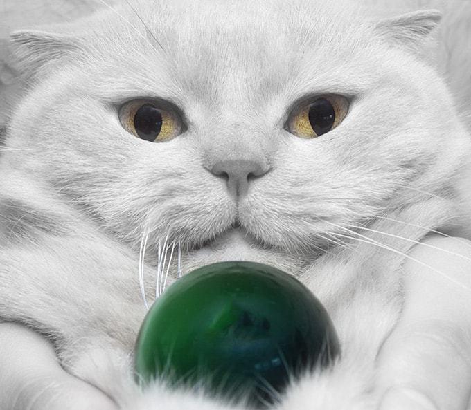 Co wpływa na długość życia kota?