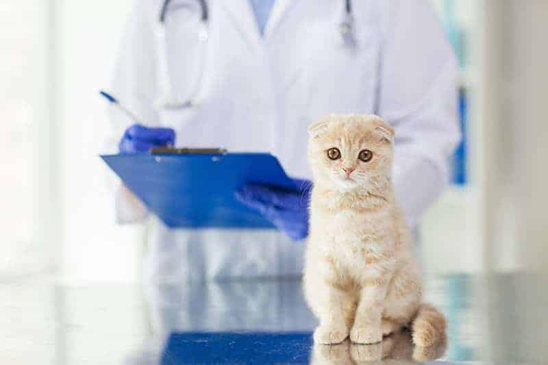 Przyczyny mocznicy u kota